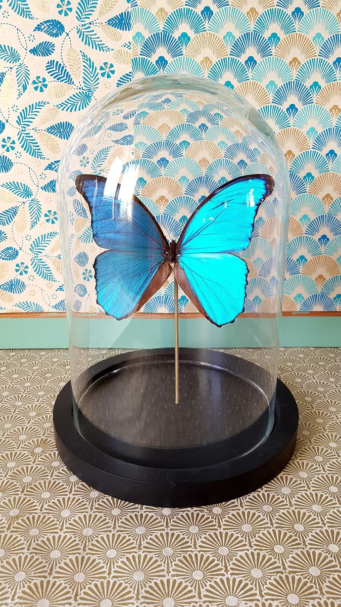 Cloche morpho  - product image