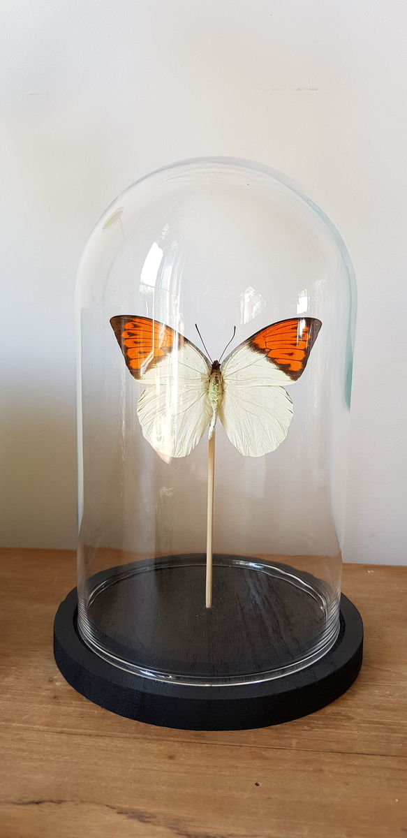 Cloche papillon - product images  of