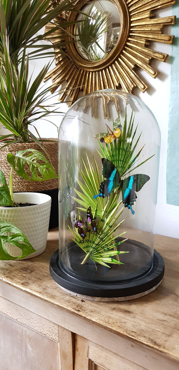 Grande cloche jungle - product images  of