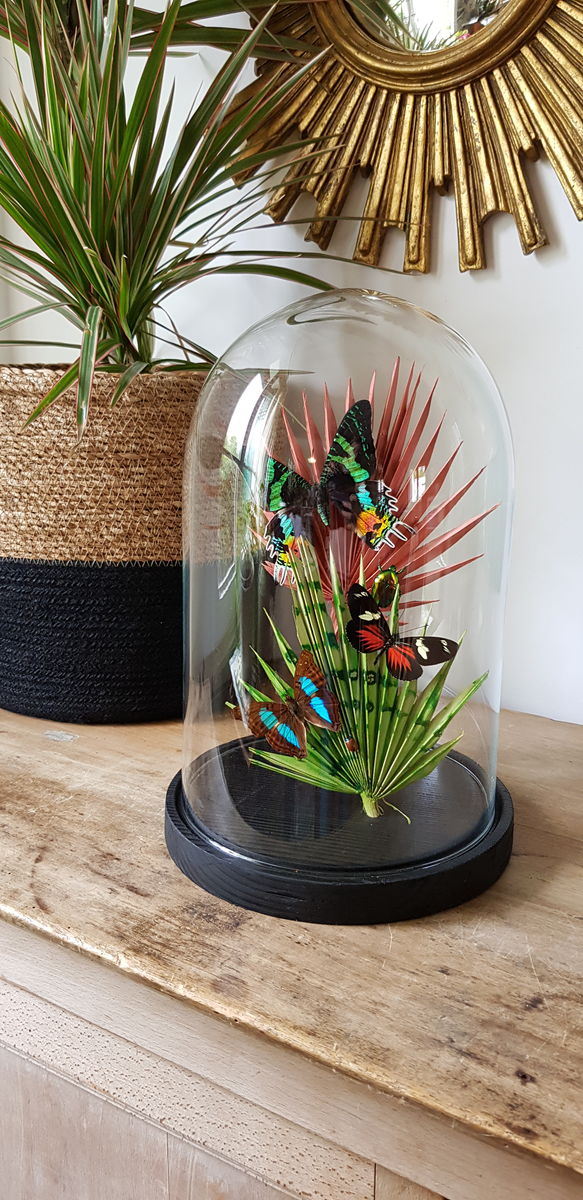 cloche jungle  - product images  of