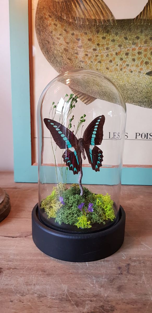 Cloche paysage graphium Milon - product images  of