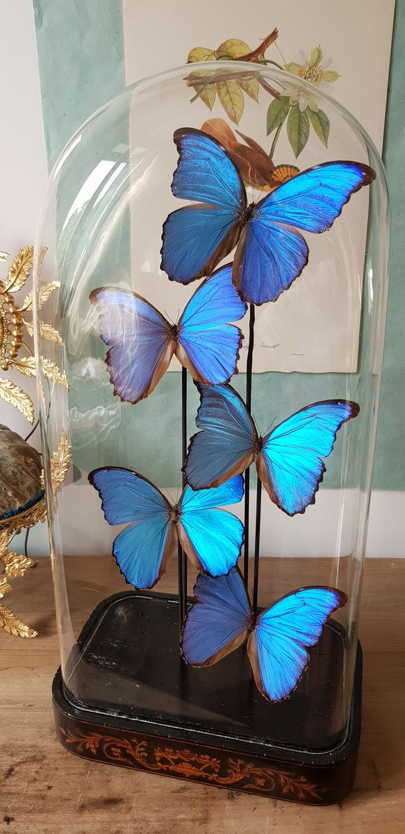 "Cloche "" morpho "" - product images  of"
