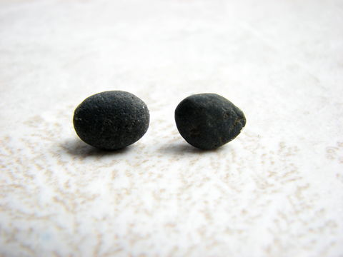 Small,Black,Ocean,Rock,Stud,Earrings, ocean rock jewelry, ocean rock studs, small rock earrings, dark grey earrings, ocean smooth rocks, stud earrings, post earrings, stainless steel posts, 1/4 inch stone, rock stud earrings, black beach stones, black beach rocks, men stud earring,