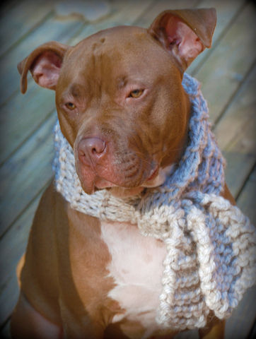 Tan,Dog,Scarf,for,Medium,or,Large,Breeds,Hand,Knit,Free,Shipping,Pets,Clothing,dog_clothes,dog_scarf,dog_scarves,dog_scarfs,dog_bandanna,hand_knit,tan,hand_knitted,dog_clothing,medium_breed,large_breed,dog_apparel,dog_accessories,acrylic_yarn
