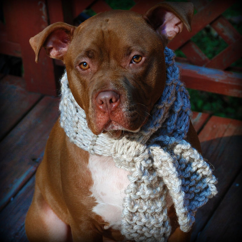 Tan Dog Scarf for Medium or Large Breeds Hand Knit Free Shipping - product images  of