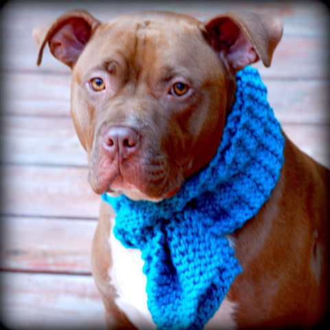 Teal,Dog,Scarf,for,Medium,to,Large,Breeds,Hand,Knit,Pets,Clothing,dog_scarf,teal_scarf,hand_knit,hand_knitted,dog_scarves,dog_scarfs,dog_bandanna,medium_breed,large_breed,dog_clothing,dog_clothes,knitting,dog_fashion,acrylic_yarn