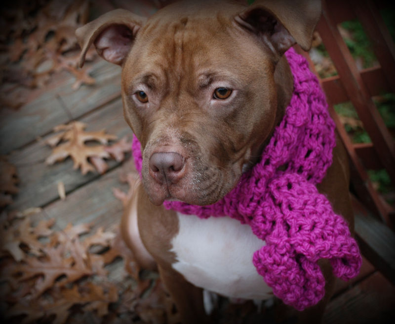 Pink Crocheted Dog Scarf - product images  of