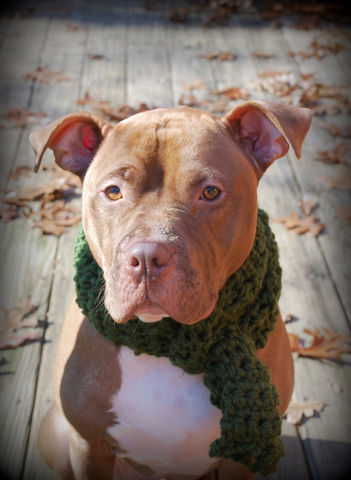 Green,Dog,Scarf,for,Medium,or,Large,Breeds,Pets,Accessories,dog_scarf,dog_scarves,dog_scarfs,green_scarf,crochet,chunky_scarf,neckwear,dog_accessories,dog_clothing,dog_apparel,medium_breed,large_breed,winter_scarf,acrylic_yarn