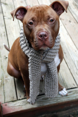 Taupe,Dog,Scarf,Hand,Knit,for,Medium,to,Large,Breeds,Pets,Accessories,taupe,tan,medium_breed,large_breed,dog_scarf,doggie_scarf,dog_scarves,dog_scarfs,hand_knit,hand_knitted,pet_clothing,dog_apparel,dog_clothing,acrylic_yarn