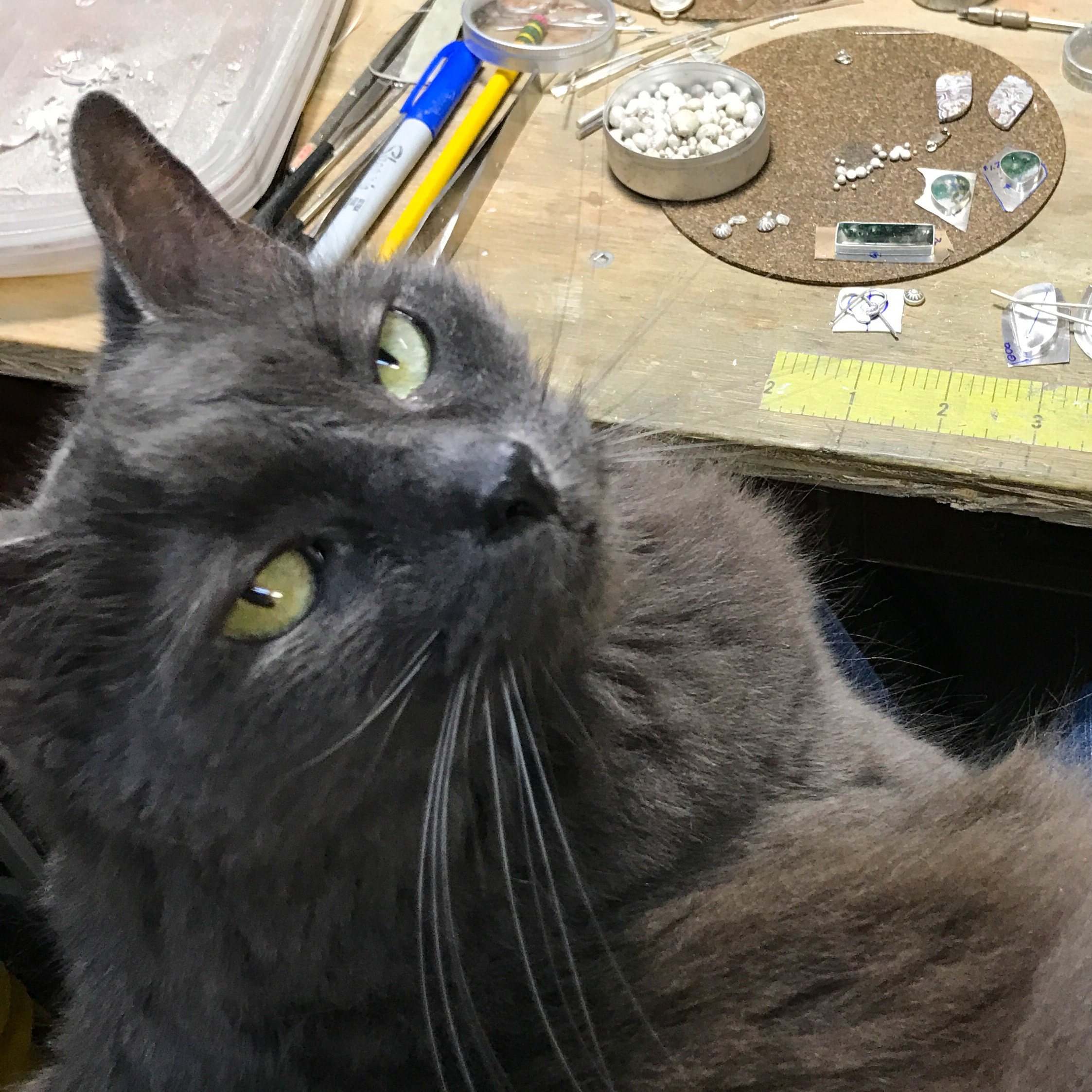 MosaicSmith shop cat.