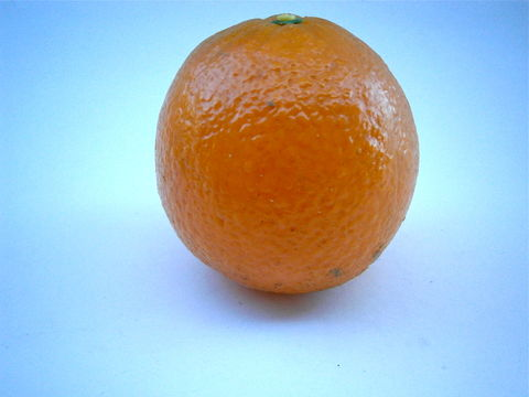 Vintage,Life,Size,Orange,Fruit,Plastic,Display,Squish,Tropical,Kitchen,Décor,Table,Setting,Center,Piece,Single,Island,Wedding,Centerpiece,vintage life size orange fruit, life size plastic orange fruit, life size orange, orange table setting, orange centerpiece, orange room décor, orange island wedding theme, orange kitchen décor, orange island fruit, orange fruit display, soft plastic orang