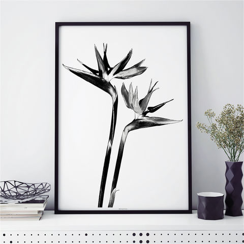 Black,and,White,Wall,Art,Prints,-,Botanical,Living,Room,Black and white wall art prints, botanical prints, living room art