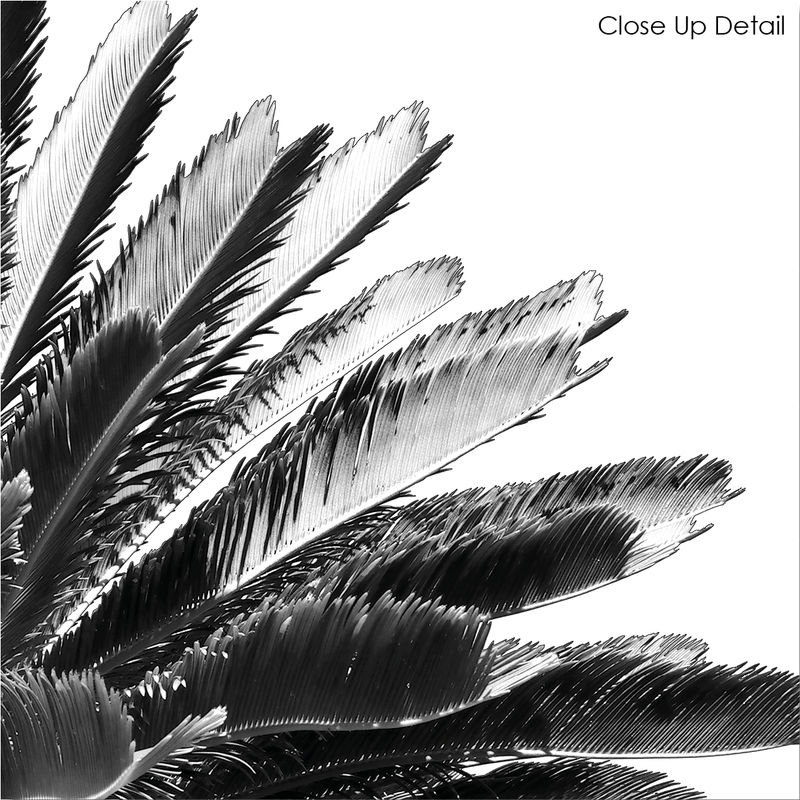 Monochrome Prints - Palm Tree Botanical Print - product images  of