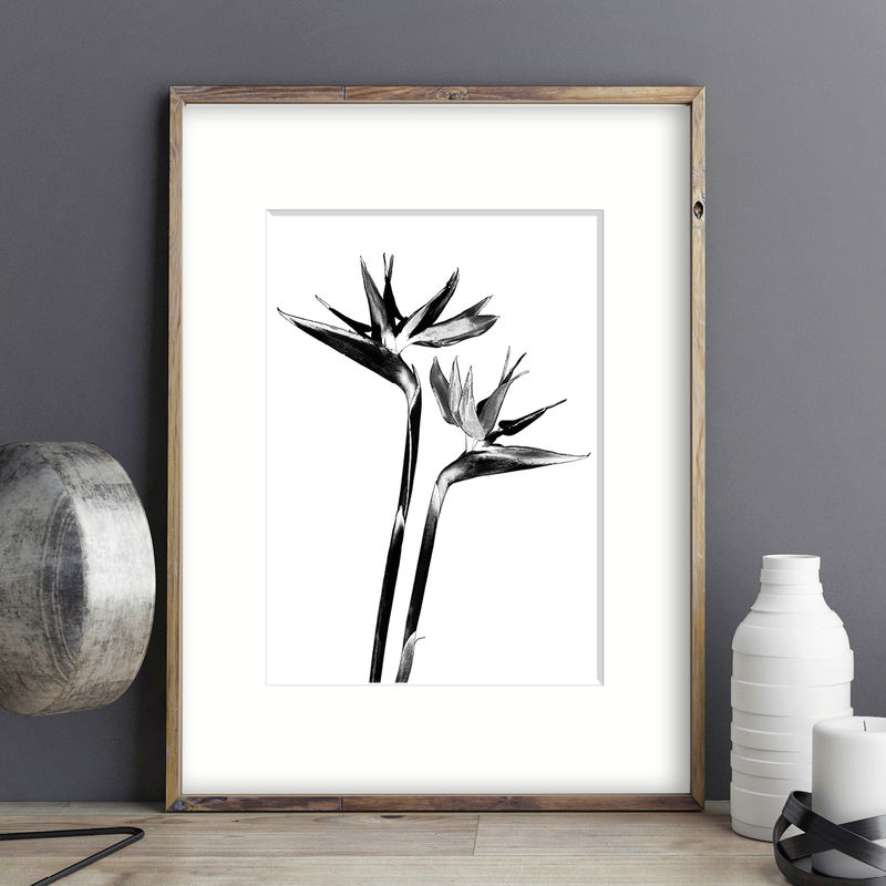 Black and White Wall Art Prints - Botanical Prints - Living Room Art - product images  of