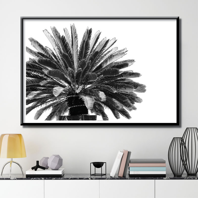 Palm Tree Print - Botanical Prints - Tropical Prints - Minimalist Print - Black and White Art Prints - product images  of