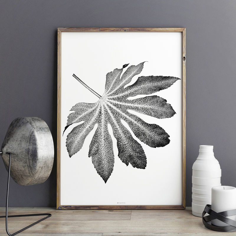 Botanical Wall Art Prints - Leaf Print - Black and White Art Prints - product images  of