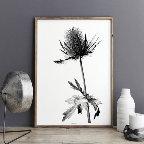 Botanical,Art,Print,-,Minimalist,Thistle,Large,Wall,art,Botanical Art Print - Minimalist Print - Thistle Print - Large Wall art