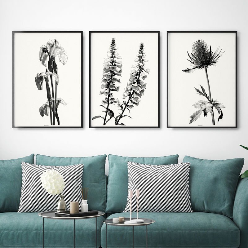 Set of Three Botanical Wall Art Prints - Black and White Art Prints -  - product images  of