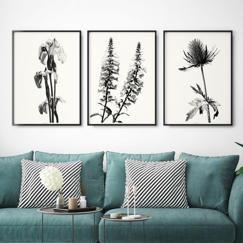 Set,of,Three,Botanical,Wall,Art,Prints,-,Black,and,White,Set of three botanical wall Art Prints - Botanical Art  - Black and White Wall Art prinrs