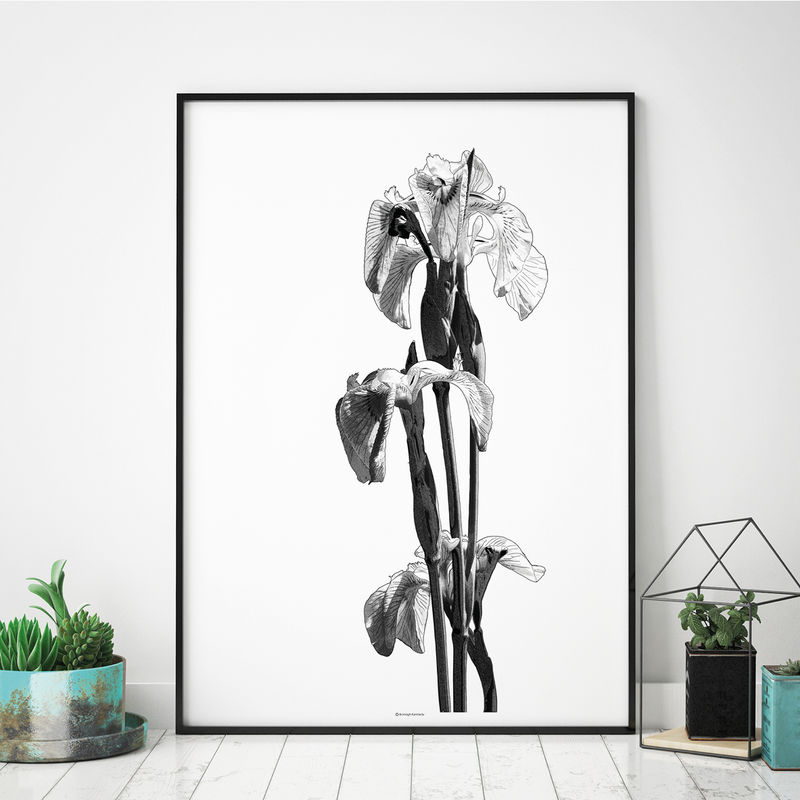 Black and White Botanical Wall Art Print - Floral Art - Large Wall art - product images  of