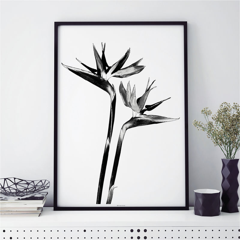 Set of 4 Botanical Prints - Black and White Large Wall Art - product images  of