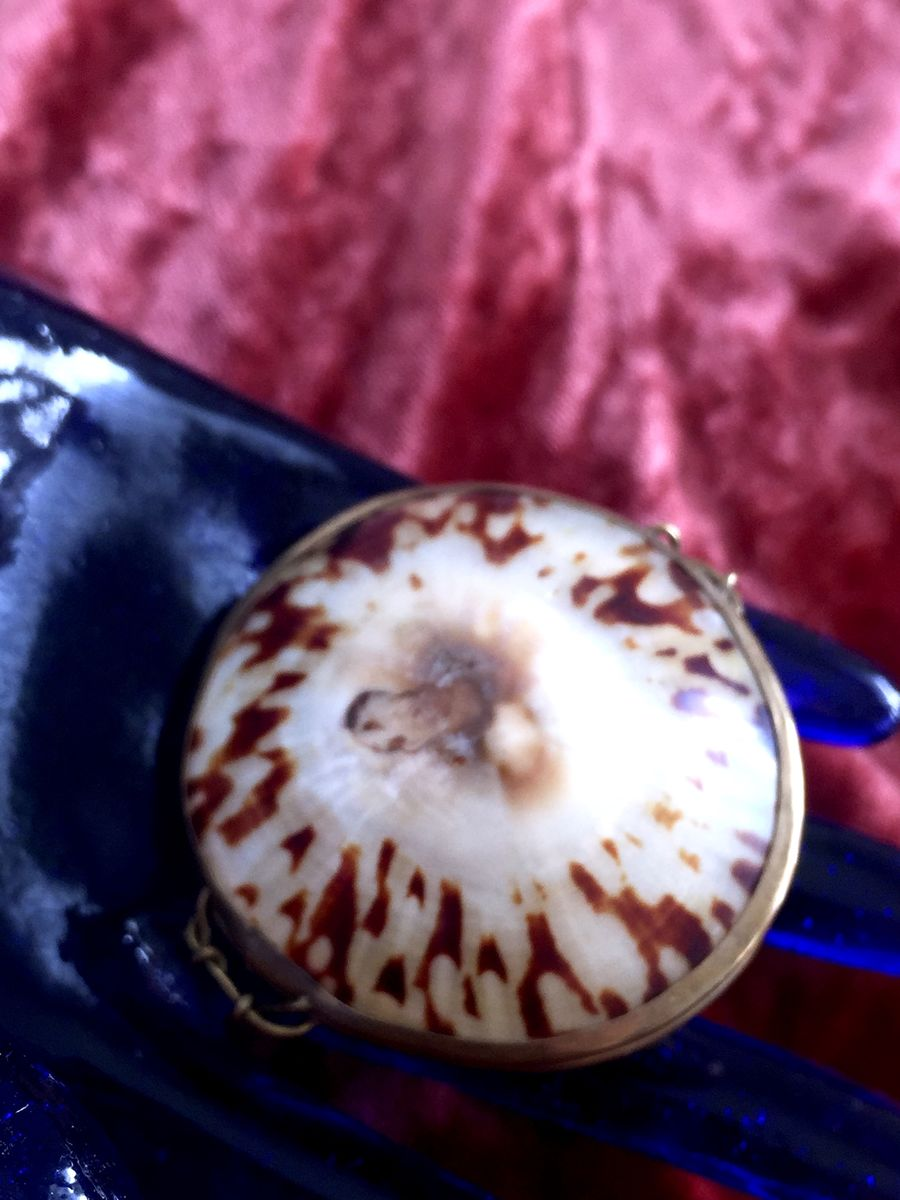 Victorian Shell Coin Purse Antique - product images  of