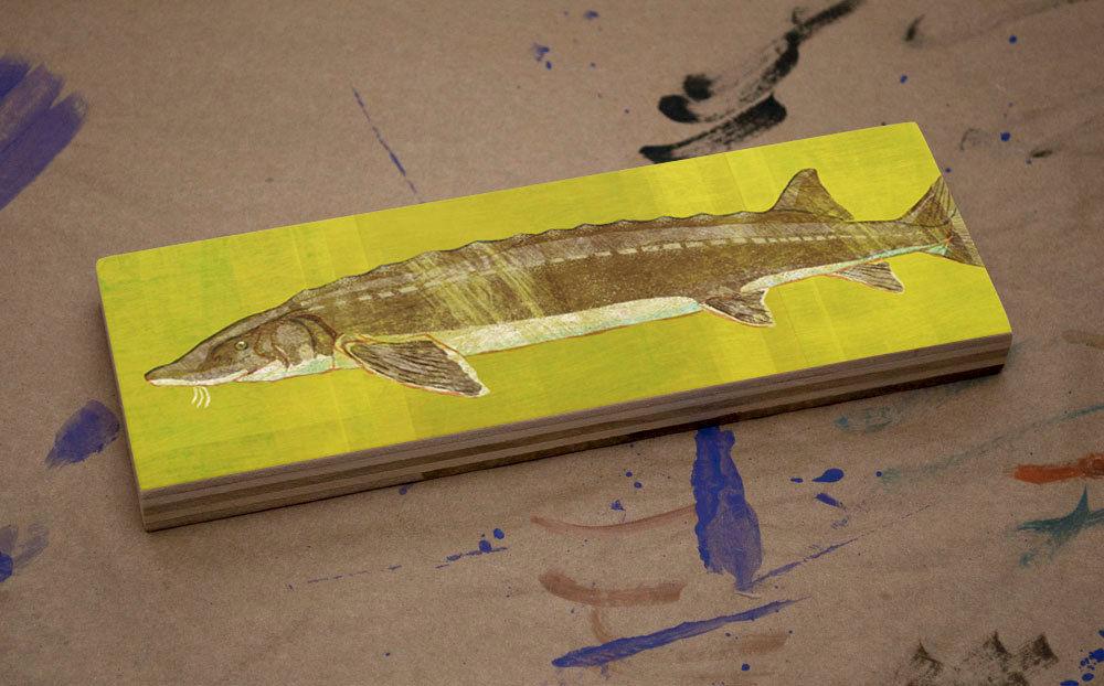 Freshwater Fish Art Medium Art Block- Lake Sturgeon Art Print- 9\