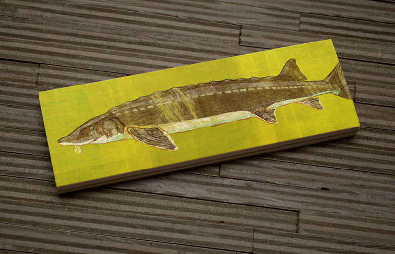Freshwater Fish Art Medium Art Block - Lake Sturgeon Art Print - 9 in x 3 in Fish Wall Decor Fisherman Gift - Fathers Day Gift for Dad - product images  of