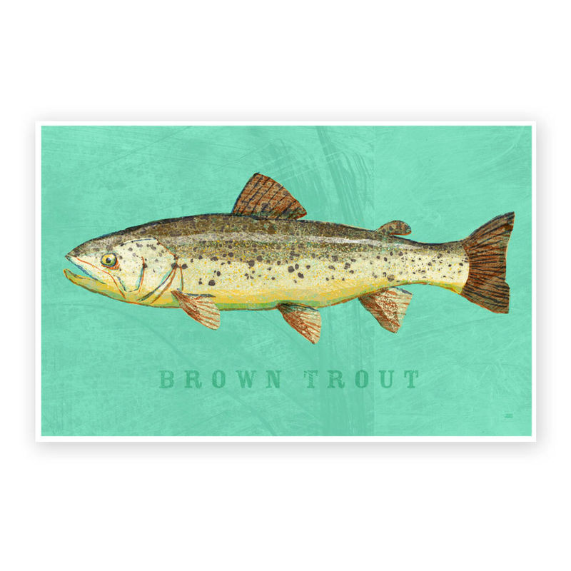 Brown Trout Art Print - Freshwater Fish Art - 8