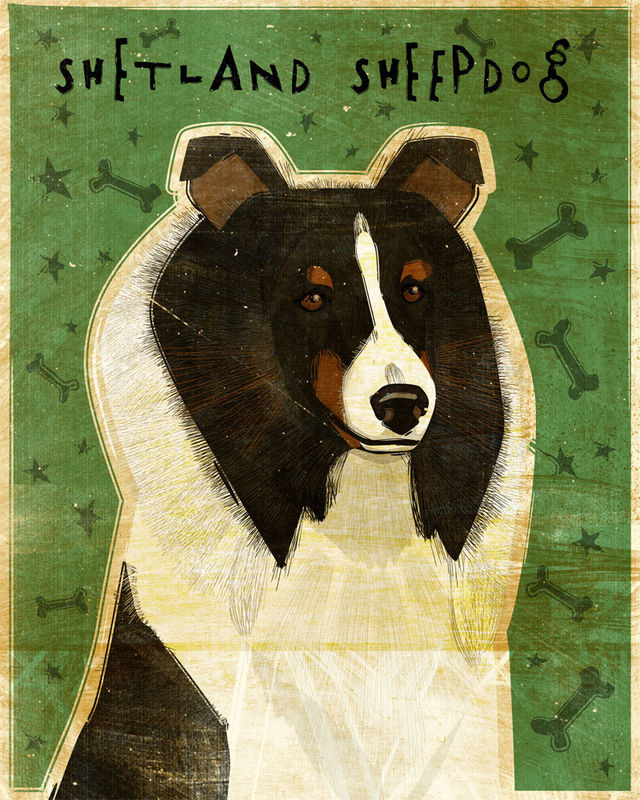 Shetland Sheepdog - Tri-Color - Dog Art Print 8 in x 10 in - product images