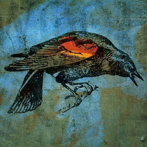 Red,Wing,Blackbird,No.,1,Bird_Art,Illustration,Print,painting,mixed_media,altered,vintage,bird,animal,johnwgolden,blackbird,paper,camera
