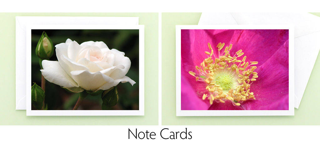 Mary Foster Creative garden flower photography blank note cards stationery