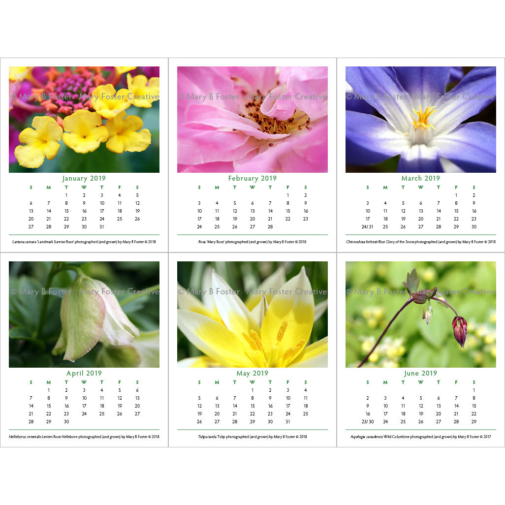 Garden Flowers Photography 2019 Desk Calendar with cd case easel stand - product images  of