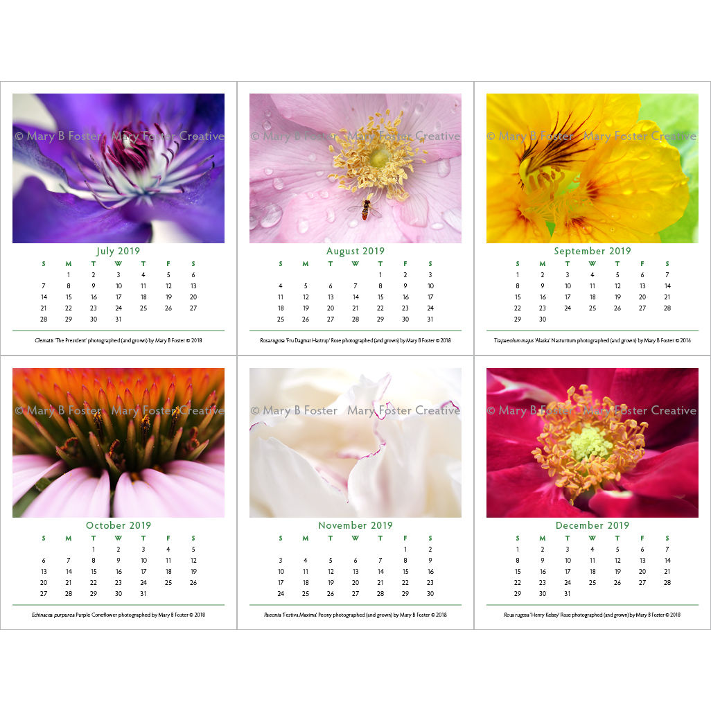 Garden Flower Photography 2019 Calendar, loose leaf calendar refill for cd case easel - product images  of