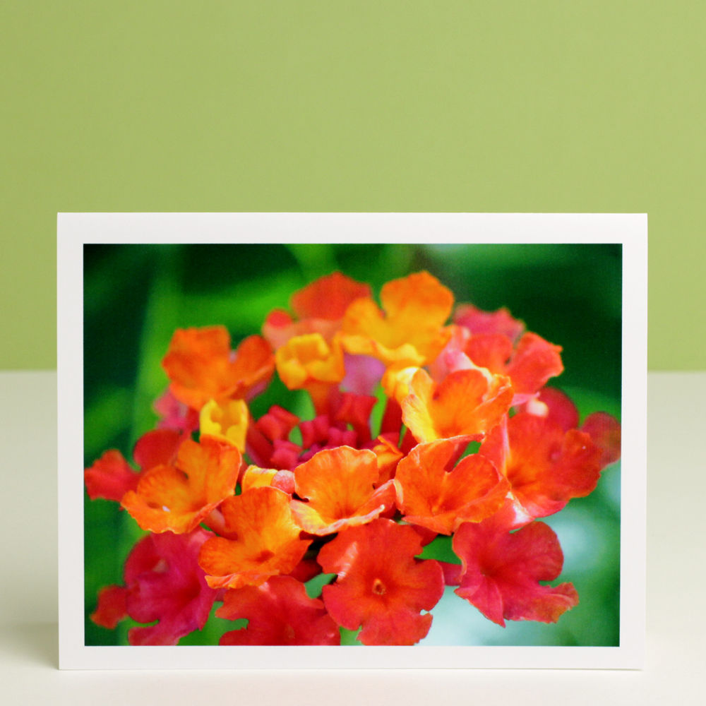 Garden Flower Photography Note Card, 'Desert Sunset' Lantana - product images  of