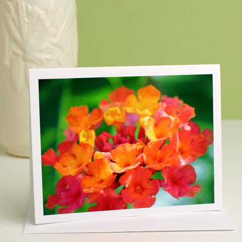 Garden,Flower,Photography,Note,Card,,'Desert,Sunset',Lantana,Paper Goods, all occasion stationery, blank greeting card, floral photography, lantana flower photo note card, red orange, pink, yellow, green, Mary Foster Creative