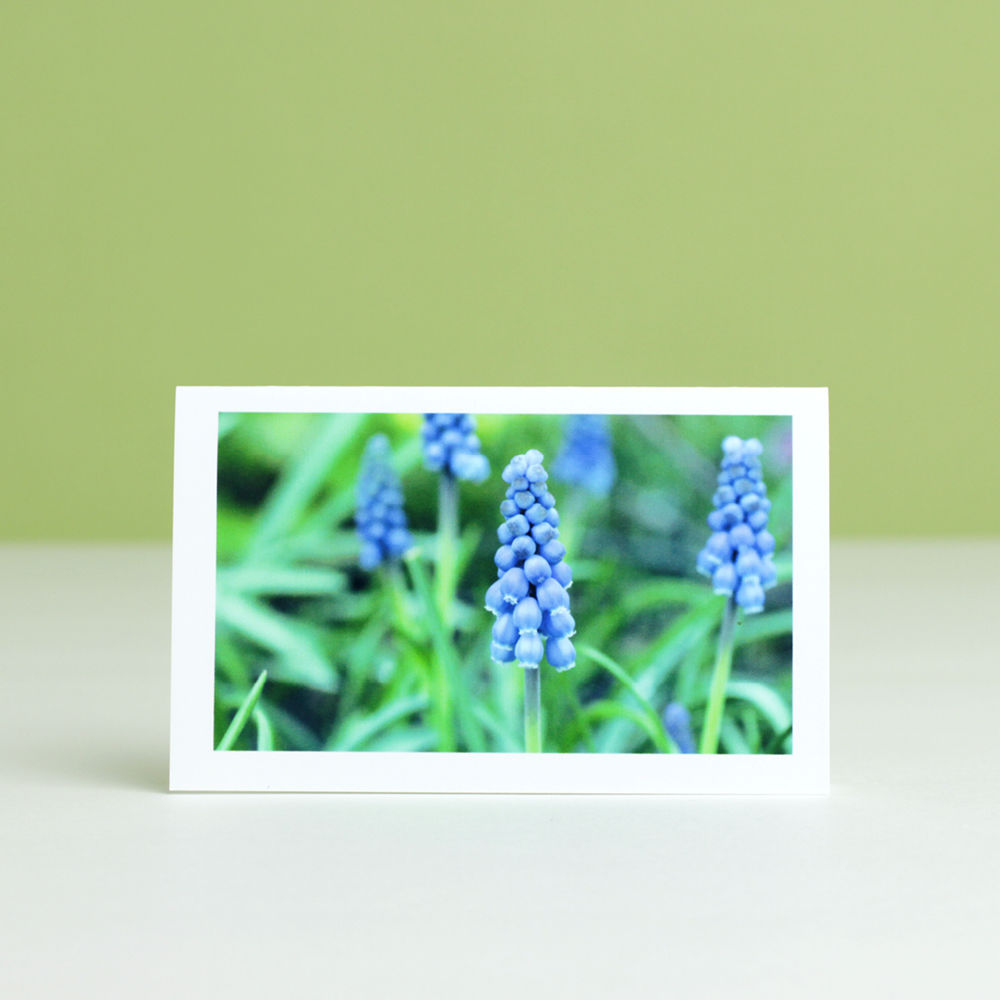 Blue Garden Flowers Photo Gift Enclosure Cards, assorted box of 6 - product images  of