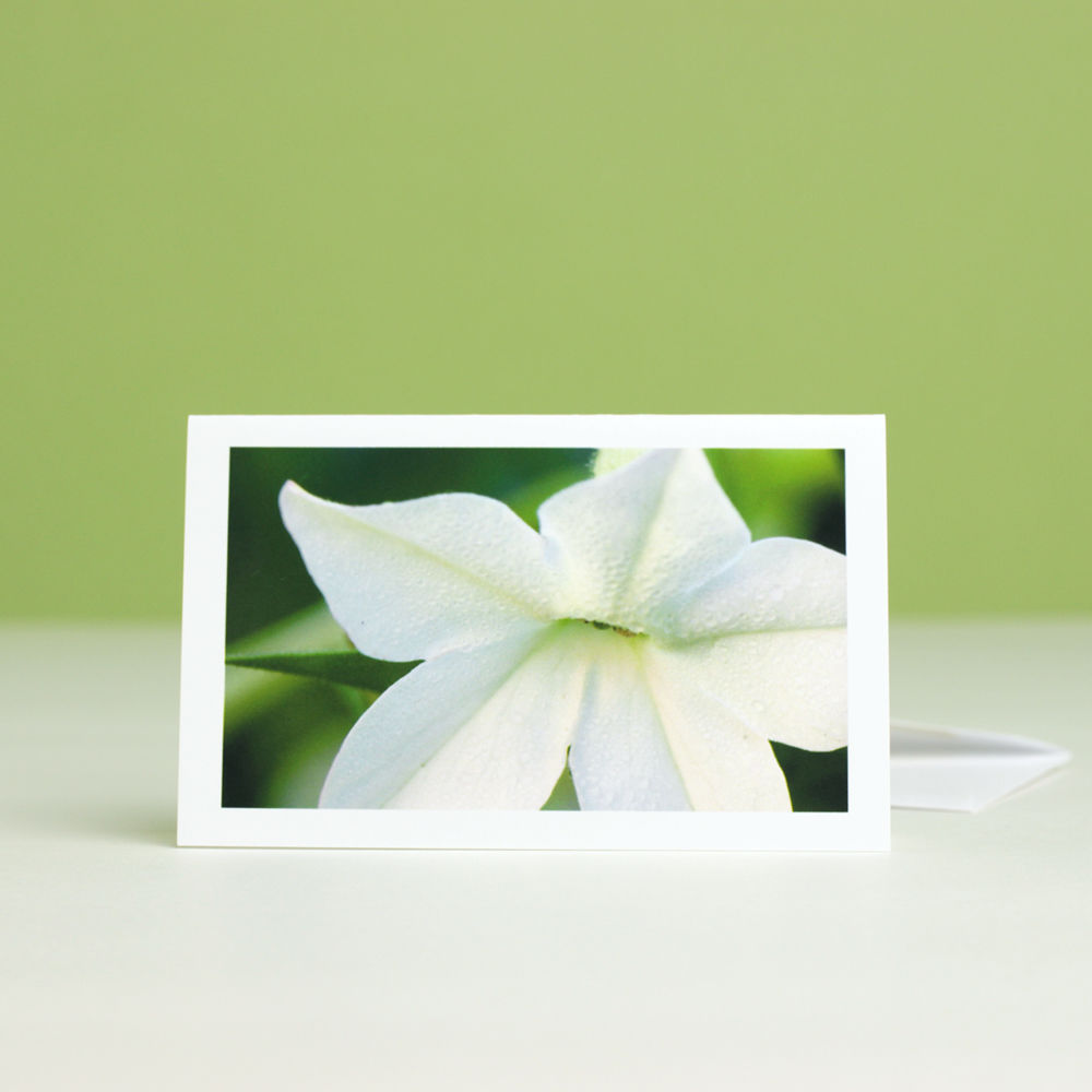 White Flowers Photography Gift Enclosure Cards collection, boxed set of six - product images  of
