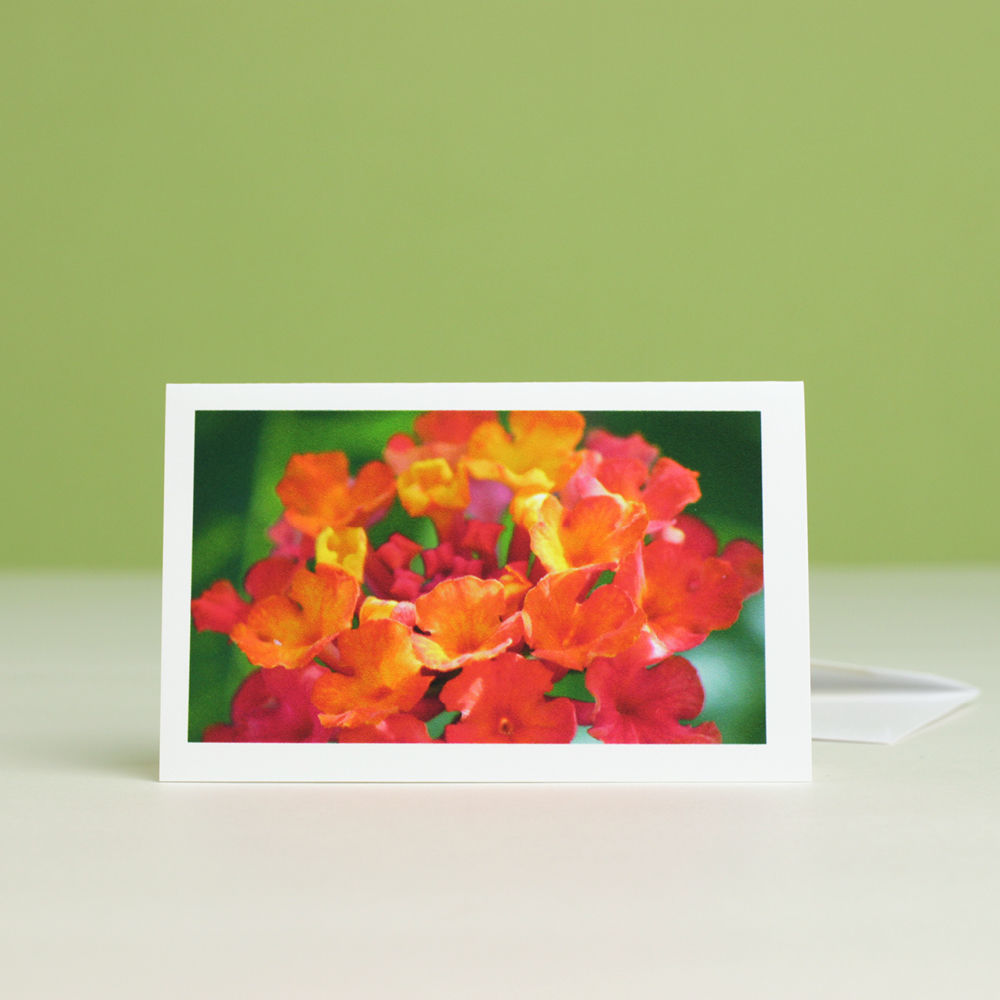 Summer Garden Flowers Photo Gift Enclosure Cards, boxed assortment of six - product images  of