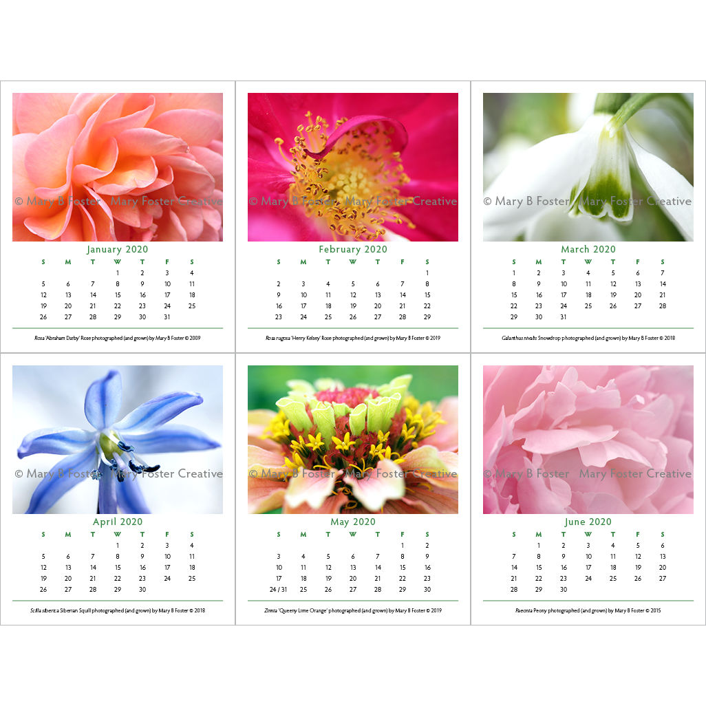 Garden Flower Photography 2020 Calendar, loose leaf calendar refill for cd case easel - product images  of