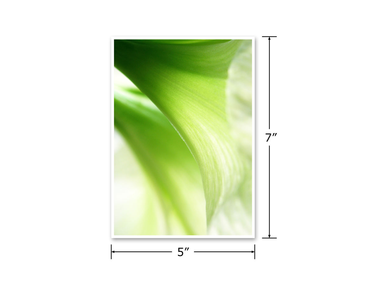 Abstract Green Flowers Photograph, 'Moonlight' Amaryllis - product images  of