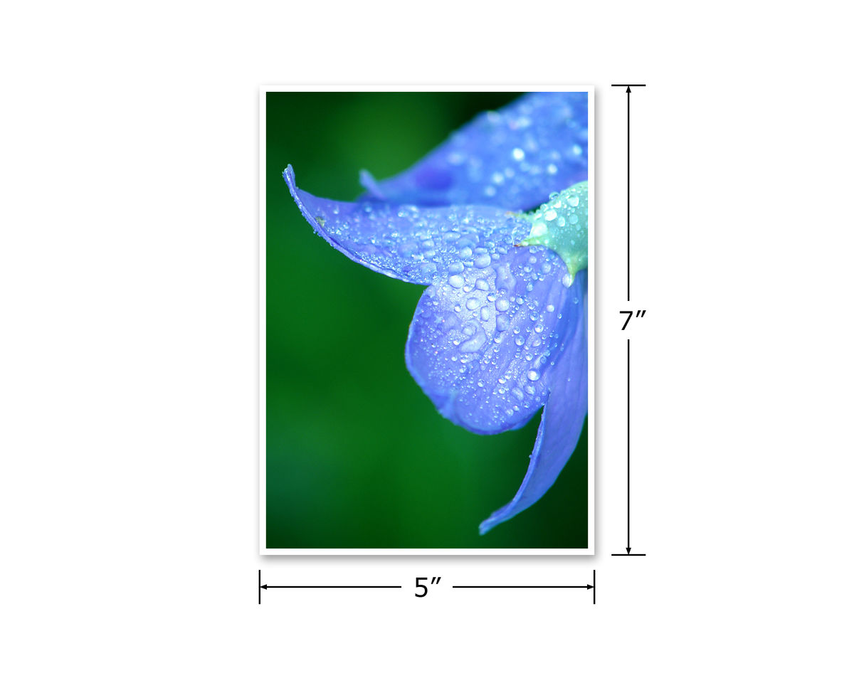 Dewdrops on Blue Flower Petals Fine Art Photograph, Blue Green - product images  of