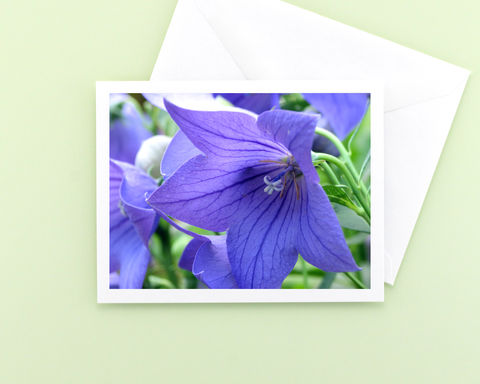 Platycodon,'Sentimental,Blue',Balloon,Flower,photography,note,card,Paper Goods, all occasion stationery, floral photo blank note card, Platycodon Sentimental Blue Balloon Flower, garden flower photography note card, Mary Foster Creative
