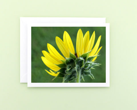 Bright,Yellow,Sunflower,photo,note,card,Paper Goods, all occasion stationery, blank note card, floral nature photography, bright yellow sunflower, garden flower photo note card, Mary Foster Creative