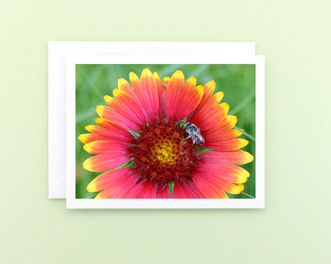 Nature,Photography,Note,Card,,Red,Blanket,Flower,with,Bee,Paper Goods, all occasion stationery, blank greeting card, nature photography, red blanket flower photo note card, Longhorn bee, Mary Foster Creative