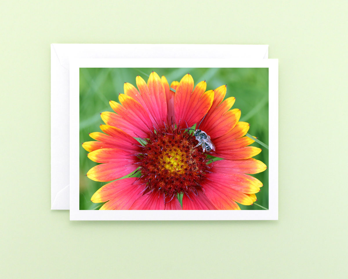 Nature Photography Note Card, Red Blanket Flower with Bee  - product images  of