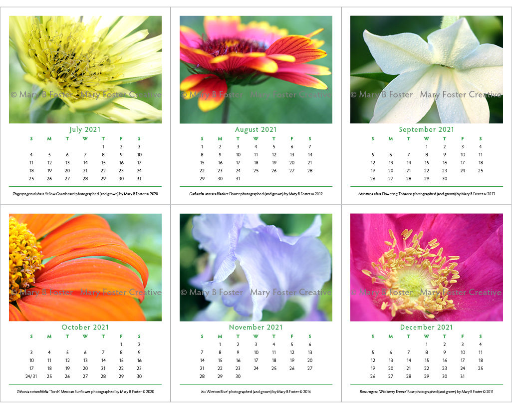 Garden Flower Photography 2021 Calendar, loose leaf calendar refill for cd case easel - product images  of
