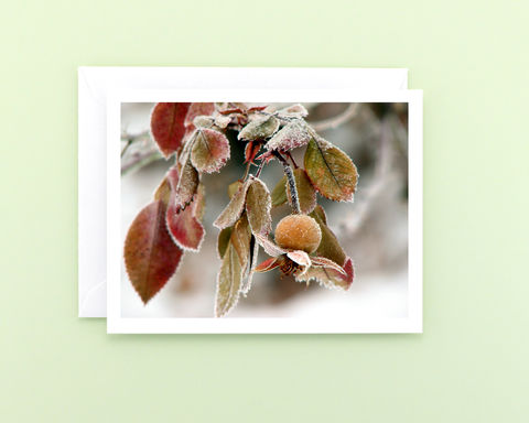 Winter,Nature,Photography,Note,Card,,Frosted,Rose,Hip,Paper Goods, Cards, Photo, frosted rose hip photo note card, winter photography card, Christmas card, botanical greeting card, seasonal holiday stationery, fine art photo card, nature photography, Mary Foster Creative