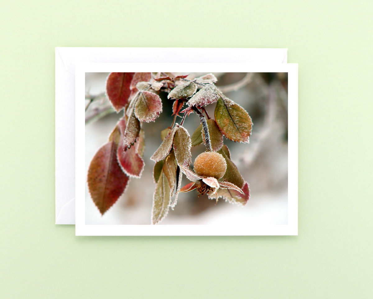 Winter Nature Photography Note Card, Frosted Rose Hip - product images  of