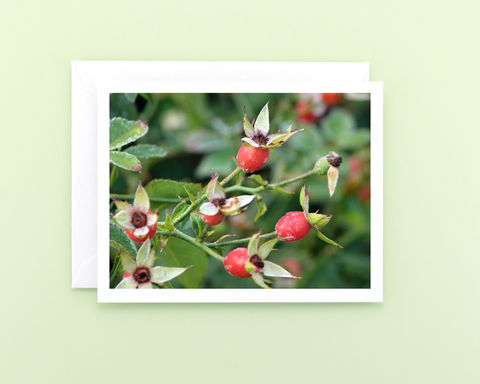 Red,Rose,Hips,Nature,Photography,Note,Card,Paper Goods, Cards, Photo, red rose hips photo note card, botanical photography card, Christmas card, seasonal greeting card, holiday stationery, fine art photo card, nature photography, Mary Foster Creative